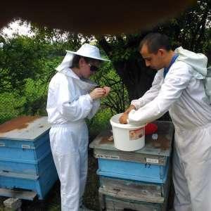 """Пчелна ферма ,,Александрови"""""""