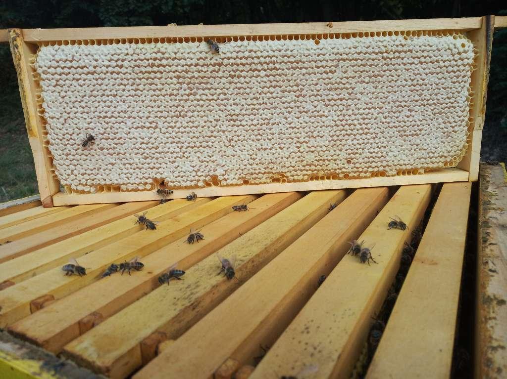 Пчелна пита с мед
